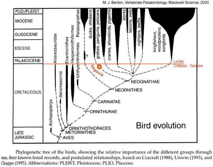 Histoire phylogénétique des oiseaux (état des connaissances à la fin des années 1990)