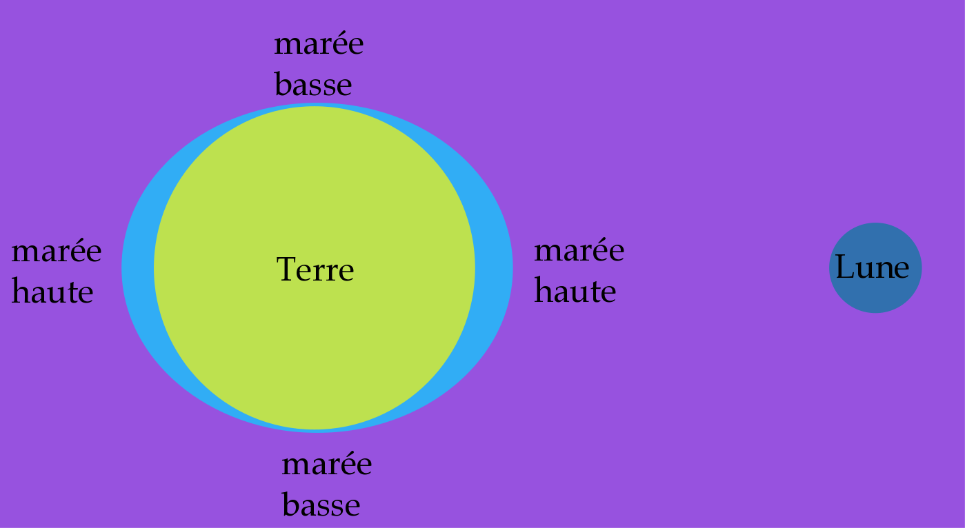 explication maree