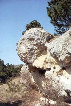 Stromatolithe oligocène de Limagne