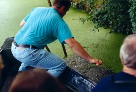 Le marais mouillé poitevin