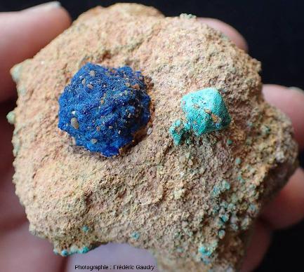 Fleur de mine d'azurite et monocristal de cuprite épigénisé en malachite, encore enchassés dans le grès triasique
