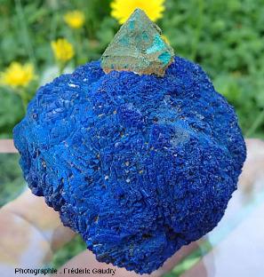 Fleur de mine d'azurite englobant la base d'un octaèdre de cuprite épigénisé en malachite