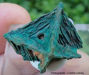 Cuprite squelettique (épigénisée en malachite)