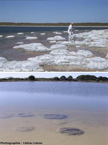 Lac à stromatolithes actuels, équivalent moderne du lac de Limagne, lac Téthis, Australie