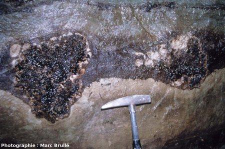 Sections de 2 stromatolithes imprégnés d'hydrocarbures très abondants et suintants, ce qui donne ce noir «brillant» à leurs sections, Mine des Rois, Dallet