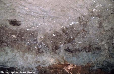 Plafond d'une galerie avec nombreux fossiles d'Helix ramondi, Mine des Rois, Dallet