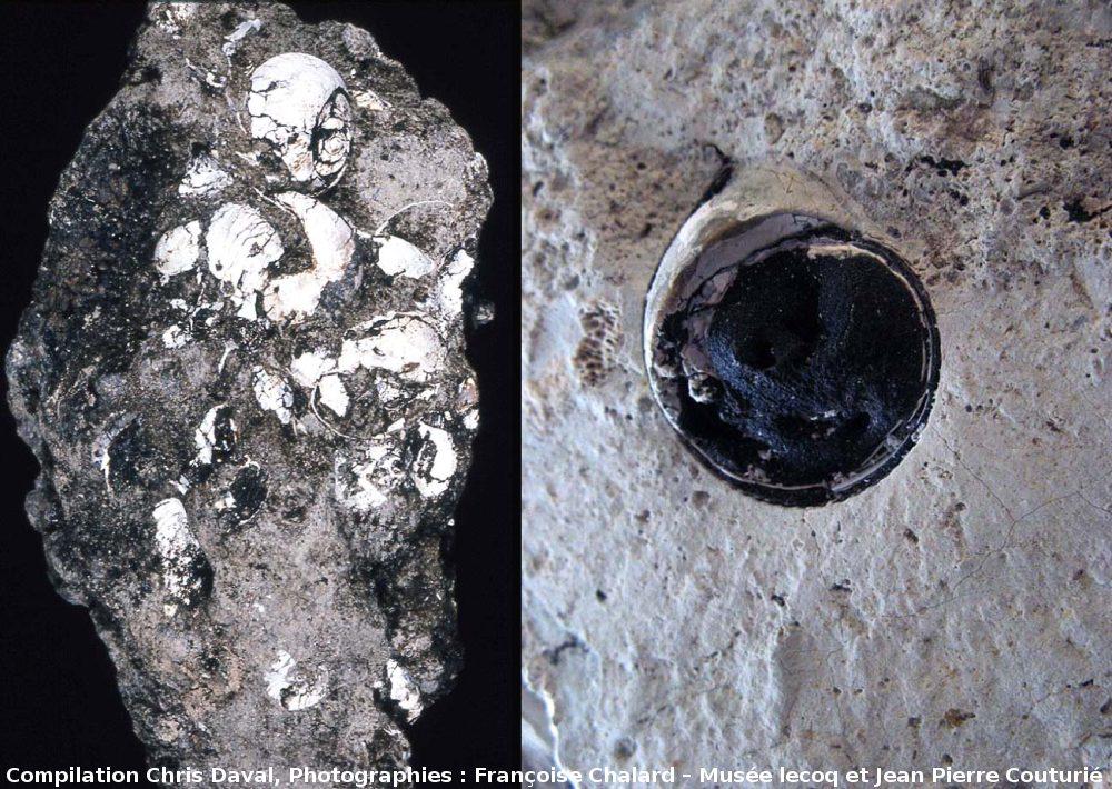 Fossiles d'Helix ramondi imprégnés d'hydrocarbures, Mine des Rois, Dallet