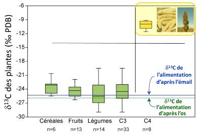 Composition isotopique du carbone de quelques groupes de plantes en C3 (en vert) et des plantes en C4 (en jaune)