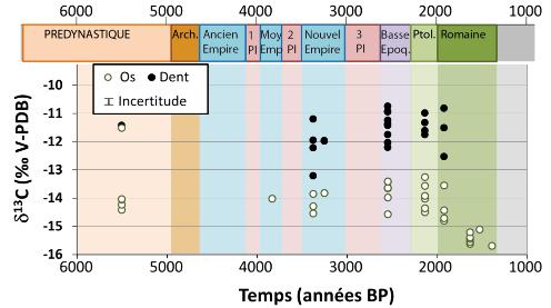 Composition isotopique du carbone dans les os et les dents de momies égyptiennes étudiées