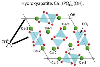 Structure de l'hydroxyapatite (pôle pur)