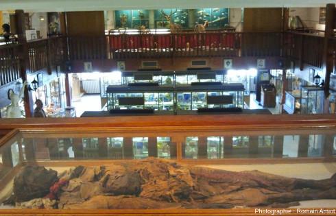 Momie copte au musée Testut-Latarjet d'Anatomie et d'Histoire naturelle médicale (Lyon)