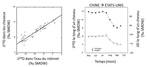 Relation entre le rapport isotopique de l'oxygène dans les cheveux et dans l'eau de boisson
