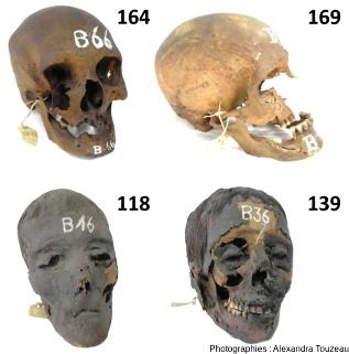 Têtes momifiées d'Égyptiens conservées au Musée des Confluences