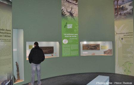 Le Paléozoïque supérieur, notamment avec des fossiles auvergnats