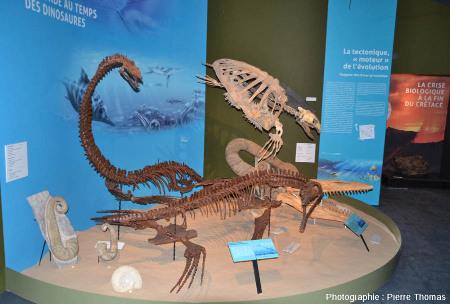 La faune mésozoïque n'était pas constituée que de dinosaures comme en témoigne ces quelques habitants des mers de l'ère secondaire