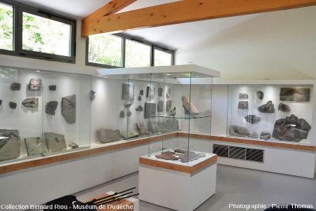 L'un des coins de la salle d'exposition du Muséum de l'Ardèche