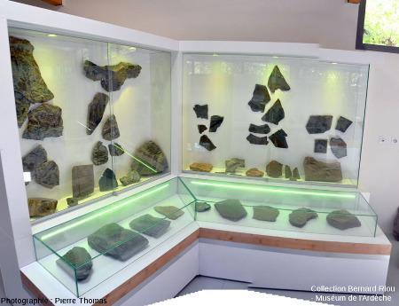 Vue d'ensemble des vitrines de fossiles du Paléozoïque, Muséum de l'Ardèche (Balazuc)