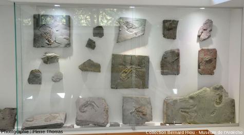 Vue globale sur la vitrine des arthropodes de La Voulte-Rompon, Muséum de l'Ardèche