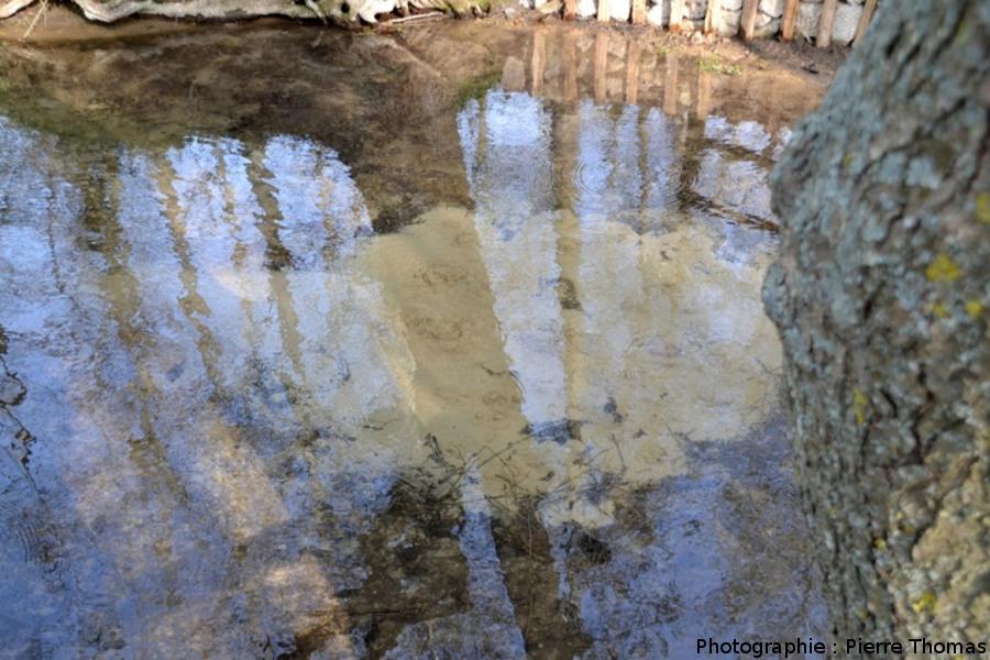 Source n°1 du bassin des Fontenils, vue générale