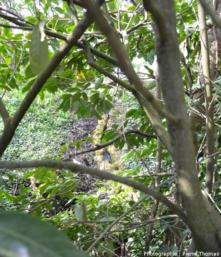 Un émissaire au NE du bassin appelé la Bouture, émissaire bordé de mini-digues de travertin