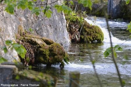 Aval de l'exutoire SO du bassin dit la Bouture, zoom sur des manchons de travertin
