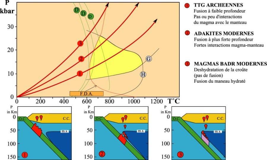 Analogue à la figure 10, mais en montrant trois situations différentes, celles des subductions «normales» actuelles, celle des adakites actuelles et celles des TTG archéennes