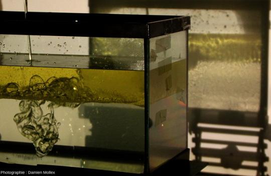 """Système convectif à deux couches et ombroscopie, transparent en observation directe et """"ombragée"""" par projection"""