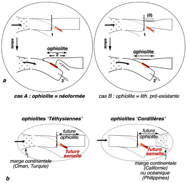 """Distinction des ophiolites selon leur """"âge"""" –ophiolite néoformée ou pré-existante, et leur position initiale par rapport à la marge continentale –ophiolite obductée ou """"pincée"""""""