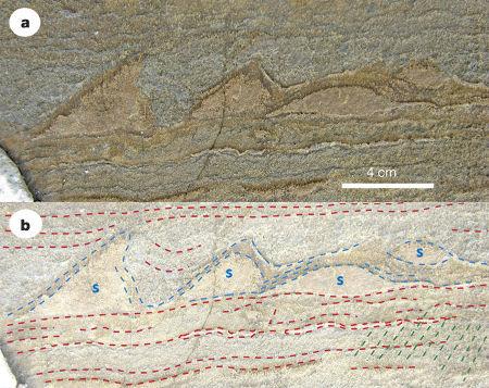 Structures sédimentaires découvertes très récemment au Groenland dans des méta-sédiments de 3,7Ga et interprétées comme de stromatolithes fossiles