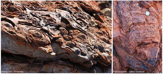 Vue de dessus et en section de stromatolites du craton de Pilbara (−3,5Ga)