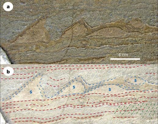 Photographies brute et interprétée montrant des dépôts laminés (traits rouges) et en dômes (s) interprétés comme des tapis et petites concrétions stromatolitiques du secteur d'Isua (Groenland)