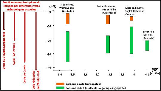 Synthèse des analyses isotopiques montrant le fractionnement (en ‰, avec le PDB comme standard) entre carbone réduit et carbone oxydé dans des gisements de l'Archéen ancien