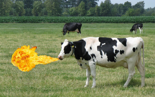 """Photomontage d'une torchère collée au museau d'une vache, pour rappeler que les organismes chimiolithotrophes, en particulier des archées méthanogènes, existent dans des milieux """"usuels"""""""