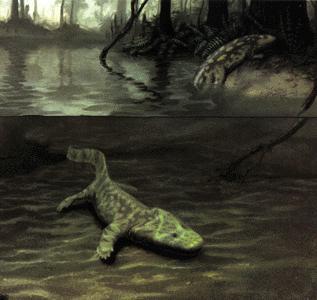 Reconstruction d'un paysage dévonien, avec les deux formes connues de premiers tétrapodes: dans l'eau, Acanthostega et se hissant sur la berge, Ichtyostega