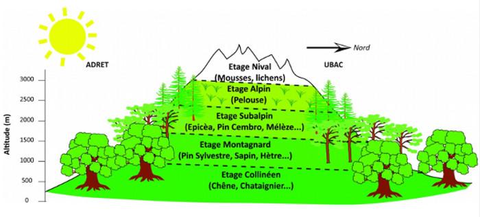 Étagement de la végétation caractéristique des moyennes latitudes