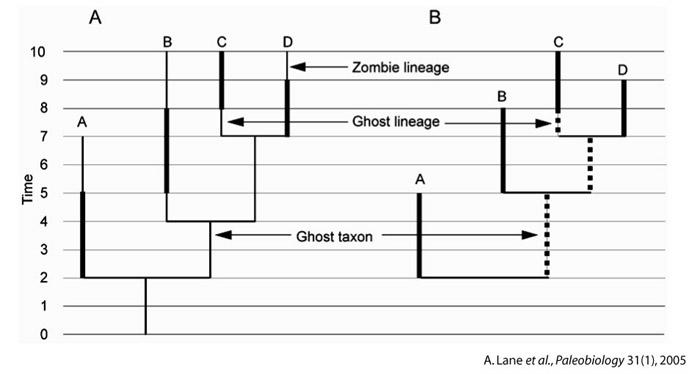 Méthode de correction des extensions temporelles réelles des taxa à partir de leur phylogénie