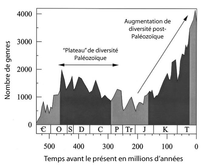 Évolution de la biodiversité des métazoaires invertébrés marins, en nombre de genres, établie à partir des données de Jack J. Sepkoski