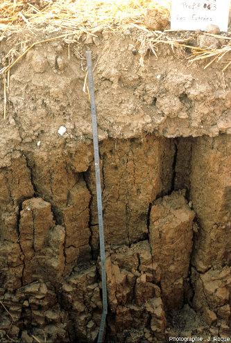Horizons semi-profonds argileux à structure prismatique grossière sous un horizon labouré limoneux