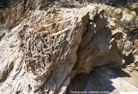 Niveau gréseux à taffonis dans les phyllades sur le littoral près de Brégançon