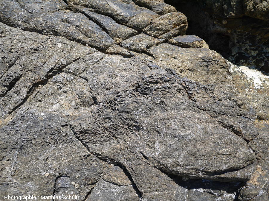 Niveau schisto-gréseux dans les phyllades sur le littoral près de Brégançon