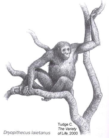 Dryopythecus laietanus