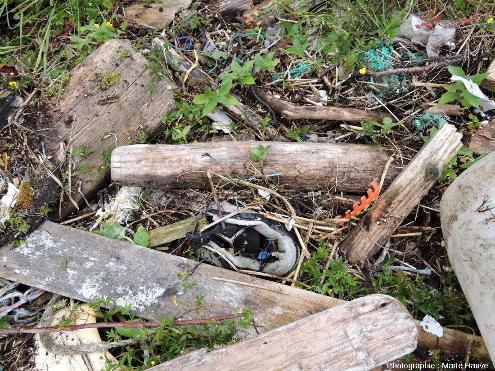 Les déchets, avec le temps, s'accumulent et contribuent à former un sol dans les baies, ile de Sotra, Norvège