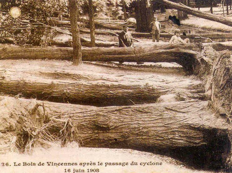 Le bois de Vincennes après la tempête du 16 juin 1908