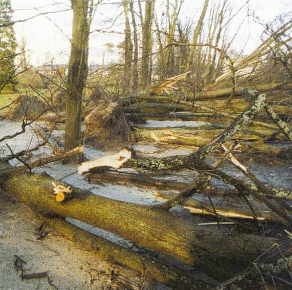 Le bois de Vincennes après la tempête de décembre 1999