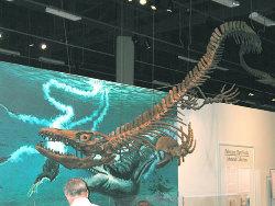 Un Lacertilien anté-tertiaire: le Mosasaure