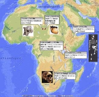 Carte de la position des découvertes de quelques-uns des fossiles d'Hominidés les plus connus et/ou les plus anciens, dont celui trouvé au Tchad, donc très loin du rift