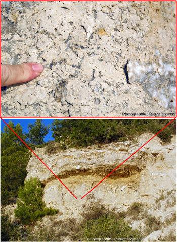 Exemple de roche sédimentaire terrestre âgée de 20Ma (Peyriac-de-Mer, Aude) et contenant des cristaux de gypse
