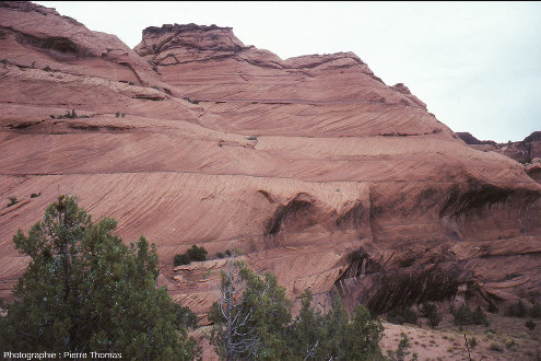 Exemple de stratifications éoliennes terrestres dans le Canyon de Chelly, grès éoliens du Permien inférieur d'Arizona