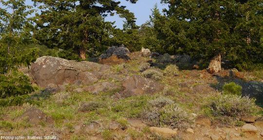 Larges rochers volcaniques (basaltes et andésites, principalement) au sommet de la Boulder Mountain (Utah), à l'Ouest du Parc national de Capitol Reef