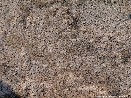 Détail d'un rocher volcanique (andésite) au sommet de la Boulder Mountain (Utah), à l'Ouest du Parc national de Capitol Reef